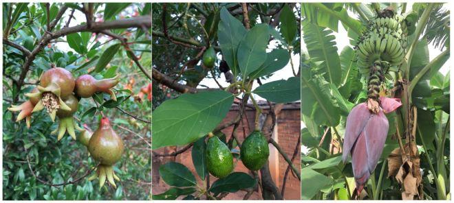 3. Growing Fruit